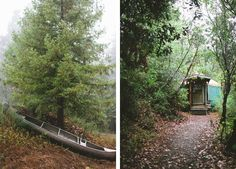 An ideal location for a rustic wedding.   Let's Frolic Together Photography   See more of this Redwood #wedding here: http://www.mywedding.com/articles/nik-and-meaghens-woodsy-watsonville-ca-wedding-by-lets-frolic-together/
