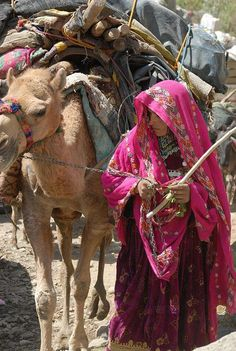 Kuchi woman, Pashtun nomads of Afghanistan. Kuchis are Afghan Pashtun nomads, primarily from the Ghilzai tribal confederacy. Most Kuchi are shepherds of sheep and goats. (V)