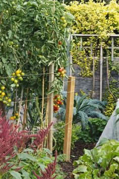 Growing veg – the 8 mistakes you can easily avoid – The Middle-Sized Garden – Do it YourSelf Interior Design Fast Growing Vegetables, Planting Vegetables, Growing Herbs, Seaside Garden, Meadow Garden, Grasses For Pots, Dwarf Plants, Planting Potatoes, Lawn Edging