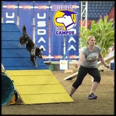 Join us for Beginner Foundation Agility! There is still space available in Kim Seiter's class on Thursdays, beginning 2/14/2013 - 4/11/2013 from 11:30AM - 12:30PM! Learn foundation agility skills including crate games, body awareness, flatwork, obstacle free shaping and more! For more information and to enroll, visit our website.