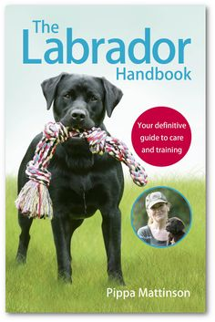 Find out the best way to buy Labrador puppies, and how to feed and potty train your puppy. We answer your questions on growth, weight, biting, health and more.