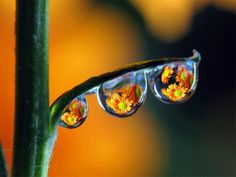 Solve DEW DROPS 6 jigsaw puzzle online with 28 pieces Reflection Photos, Reflection Photography, Macro Photography, Creative Photography, Amazing Photography, Landscape Photography, Photography Ideas, Creative Pictures, Cool Pictures