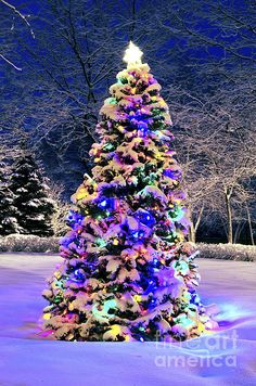 Spruce trees with holiday lights creative images pinterest i put this on my board just cuz its pretty stock photo decorated christmas tree outside with lights covered with snow workwithnaturefo