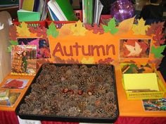 kinder - science table for fall