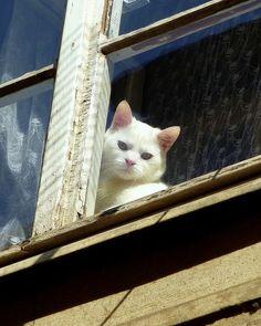 Window cat looking down