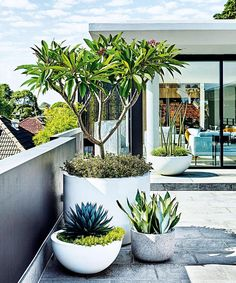 Clever landscaping from @adamrobinsondesign not only softened and complemented the sharp lines of this Sydney home, but turned a bare terrace into a warm and inviting space. FYI, these white pots took 4(!) men to carry up to the rooftop See more of this modern rooftop garden via the link in bio. Photo by @nataliehunfalvay. Styling by @adamrobinsondesign.