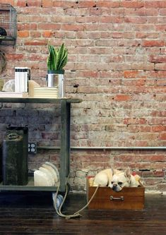 A brick wall and a drawer dog bed in the Old Faithful Shop in Vancouver.