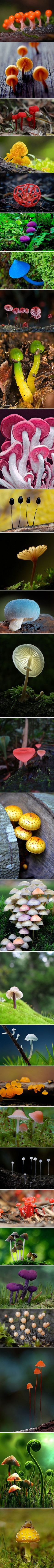 They're technically not plants, but this is an astonishing series of mushrooms!
