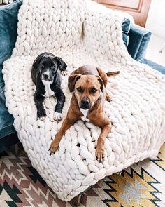 die 97 besten bilder von sch ner wohnen mit hund. Black Bedroom Furniture Sets. Home Design Ideas