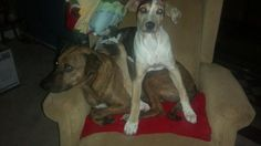 Hoots Catahoulas see us on FB