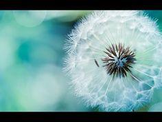 La respirazione Spirituale di Paramahansa Yogananda (meditazione guidata)