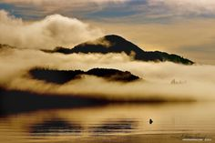 #AlistairPalmerPhotography  I was on one of my guy boat trips. I always get up early because I don't want to miss anything spectacular, and mornings at sea can bring many surprises. This morning did not disappoint. I was mesmerized by... http://weekenddad.ca/photography/39-golden-morning-fog/