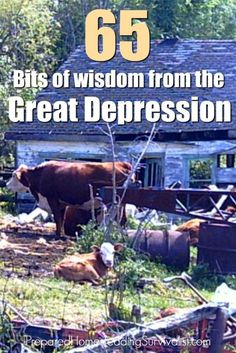 Bits of wisdom from the great depression. People who lived through the Great Depression during the 1930's in America did so largely by sheer willpower. What can we learn from them? Prepared Homesteading Survivalist