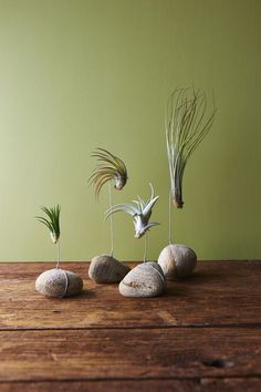 10 DIY Air Plant Holders For Your Home Tillandsia or commonly known as air plants are a type of plants that get their nutrients from the air. Succulents Garden, Garden Plants, Planting Flowers, Flower Plants, Succulent Terrarium, Succulent Display, Terrarium Ideas, Terrarium Plants, Cactus Plants