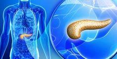 Slinivka patří k nejdůležitějším orgánům v lidském těle Health Ledger, Weight Loss Before, Medicinal Plants, Health Motivation, Holiday Travel, Health Remedies, Healthy Weight Loss, Diabetes, Health And Wellness