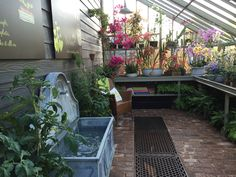 RHS Chelsea 2015. Beautiful orchid display inside our large bespoke greenhouse. With Tiber Fountain from a place in the garden.