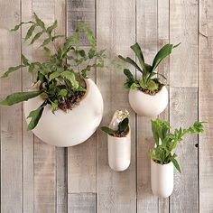 Three of these round planters will be the living fern wall in the foyer.  Can't wait until they arrive!  Shane Powers Ceramic Wall Planters #westelm