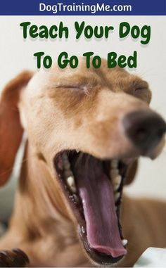 Teach your do to go to bed when it's time for sleep or just when you need a break! Learn the EXACT 6-step process you need to have success with getting your dog to go to bed in this article!
