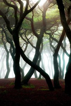 Untitled by HeungSoon I would call it dancing trees.