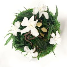 Design végétal, plantes stabilisées.Création et réalisation Adventive. Interior plant Designer.