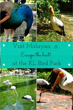 Visit Malaysia and Escape the Heat at the Kuala Lumpur Bird Park! - #travel #traveltips #malaysia #kualalumpur #asia