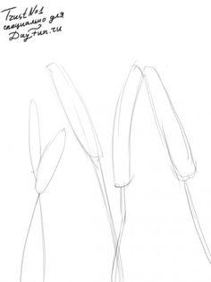 Как нарисовать пшеницу карандашом поэтапно 1