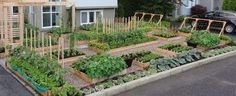 Starting a Survival Garden~What makes a survival garden different from an ordinary garden? The aim of survival gardening is to grow staple foods, not salad fixings, not flowers, not herbs. Basically, you will want to grow crops that offer substantial amounts of any or all of the three macronutrients: protein, fat, carbohydrate.