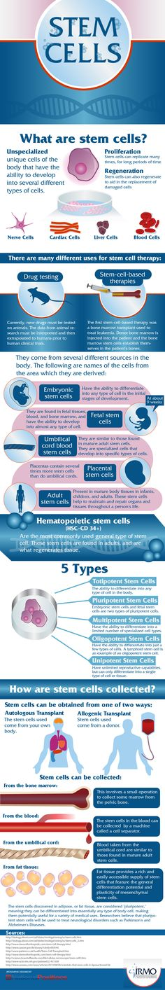 What are stem cells? - The 411 on what stem cells are and what their potential is.  - sponsored