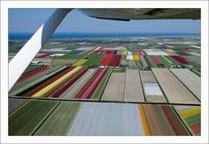Flying over the Tulips Fields - Bruxelles 5  (em Anna Paulowna, Holanda)