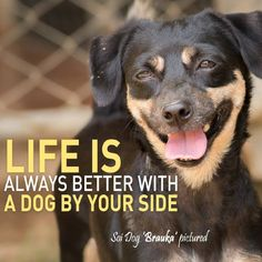 """""""Life is always better with a dog by your side.""""  SHARE if you AGREE!"""