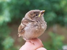 baby bird pictures - Norton Safe Search