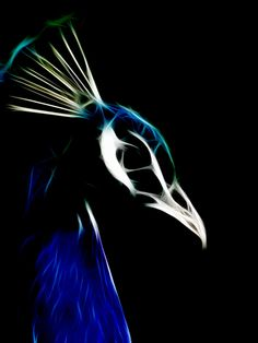 animal fractals | fractal peacock by frkdub digital art photomanipulation animals plants ...