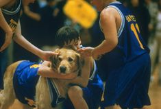 Air bud - famous dogs rip - pictures - cbs news Air Bud, Pokerface, Famous Dogs, Disney Dogs, Disney Live, Real Dog, Dog Quotes, Dog Walking, Mans Best Friend