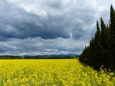 The colours of Maremma Tuscany in spring: yellow under storm clouds:)
