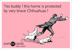 True for me! My home is protected by 3 tiny chihuahuas! The whole neighborhood hears them when they sound their little yappy alarms! Haha!