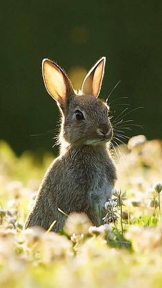 Animals And Pets, Baby Animals, Cute Animals, Wild Animals, Amazing Animals, Animals Beautiful, Beautiful Beautiful, Cute Baby Bunnies, Cute Cats