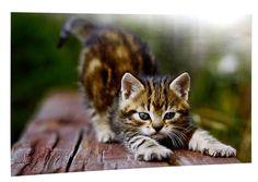 """Fajny """"kotełek"""" na plakacie :) Uwielbiam koty :). Źródło; http://www.odbitki.fotojoker.pl/fotoplakaty-i-fotoobrazy.html"""