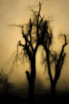 ooky spooky shadowtree; purty.