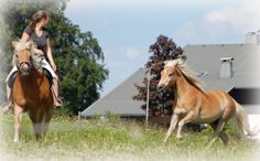 Reiten in der Urlaubsregion Faaker See. Horses, Animals, Horseback Riding, Vacation, Animais, Animales, Animaux, Horse, Animal