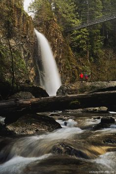 Drift Creek Falls Hike Guide, Lincoln City, Oregon Coast • Oregon Waterfall Hikes • Siuslaw National Forest • Oregon Coast Hikes // #localadventurer #waterfall #hiking #traveloregon #oregon #visittheusa #pnw #pacificnorthwest