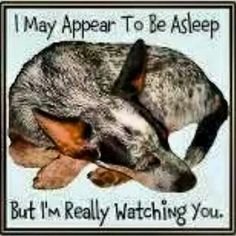 Yep!!!!! One eye open, one eye closed :) ACDs are good at that!