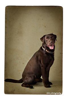 fine art pet photography