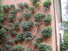 Better view of Espalier by angelajgood, via Flickr