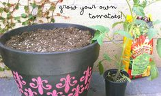 lifeonthebalcony....     (container gardening tips for apartment dwellers)