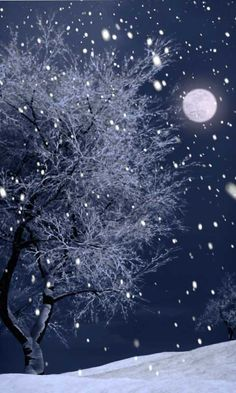 Winter Snow, the Tree, and the Moon. Nature Photography.