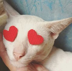 Oy oy #Katze
