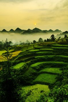Ha Giang.VN by Tran Lam, via 500px...only the most beautiful color in ze world