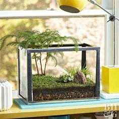 Bring the outdoors in with this beautiful, easy-to-make terrarium!