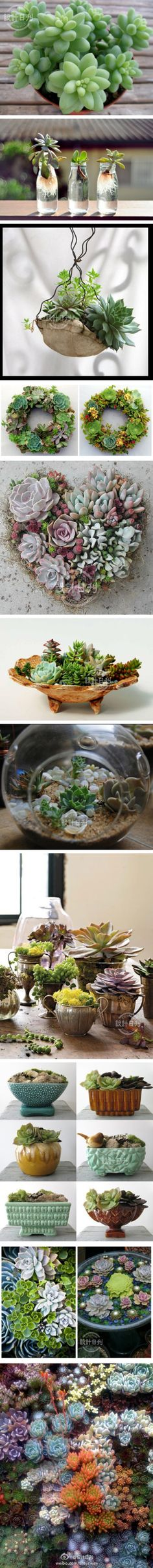 i love how these look!! might have to do a little succulent project next.. ~Succulents! by weibo.com/shejirikan  #Succulents
