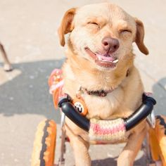 Adorable Dog with Underbite Leads Campaign to Promote the Adoption of Disabled Pets - My Modern Met